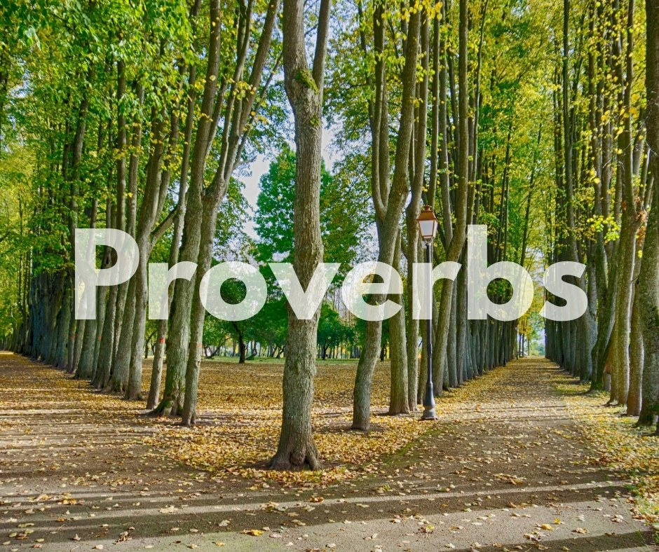 Image for the book of Proverbs showing two paths, one lighted by a lamp