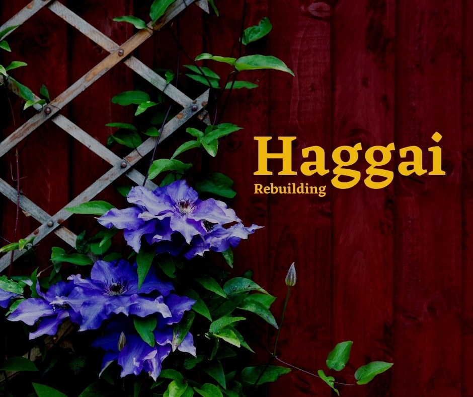 Haggai feature image